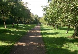 Orchard 1 (9)
